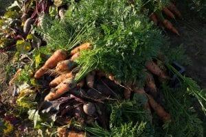 Elever fra faget Gør en forskel er på det økologiske langbrug Mangholm for at hente råvarer til fællesspisning
